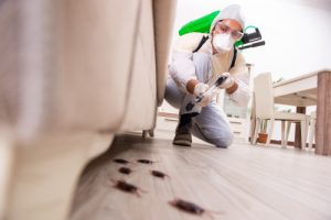 Why is Pest Control Important?