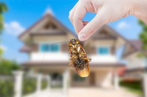 Who is Responsible for Pest Control in Rentals - The Landlord or Tenant?